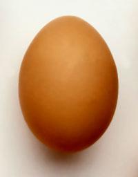 Oeufs l 39 oeuf un aliment complet riche en prot ine en vitamines et mi - Conservation des oeufs de poule ...