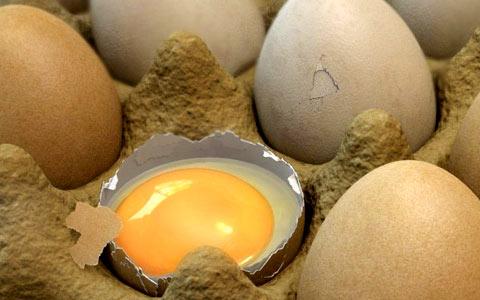 Valeurs nutritives d'un jaune d'oeuf